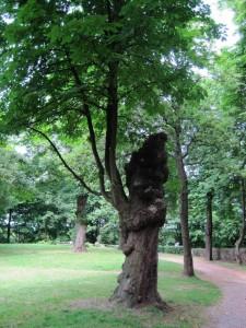 Der Baum - Edith-Stein-Exerzitienhaus, Siegburg